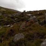 St Kevin's Way, Glendalough